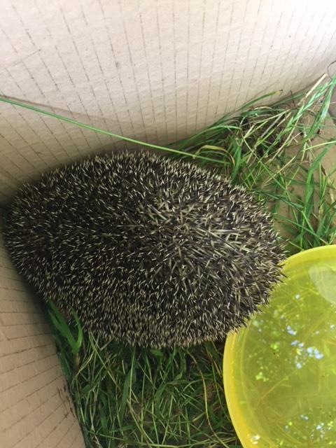 Harry the hedgehog at Kids 1st Rake Lane
